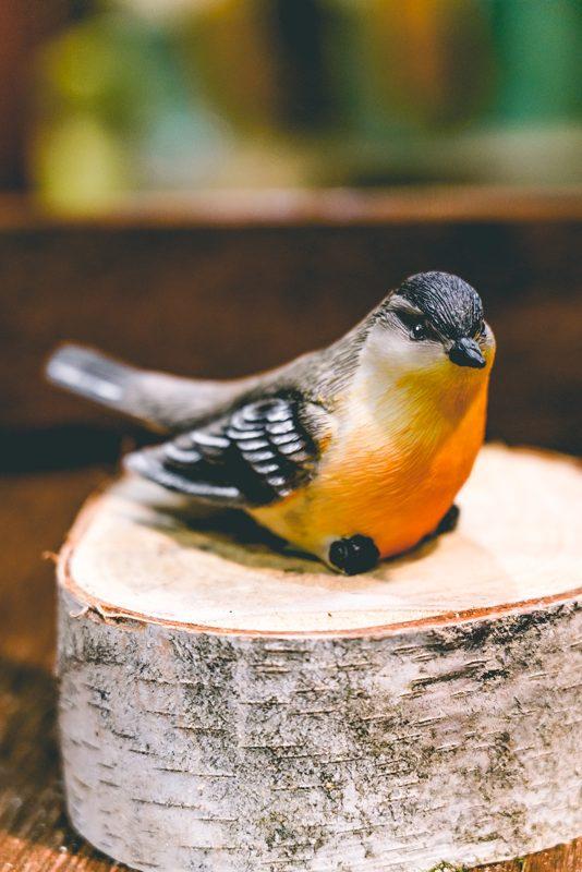 Bird on branch-01