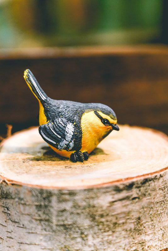 Bird on branch-04