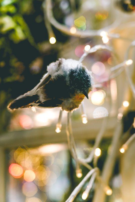 Clipped birds-03