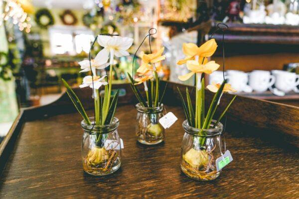Hanging Daffodil-002