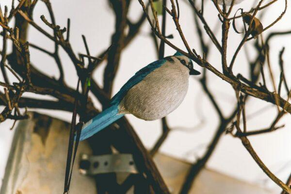 Hanging-birds-02
