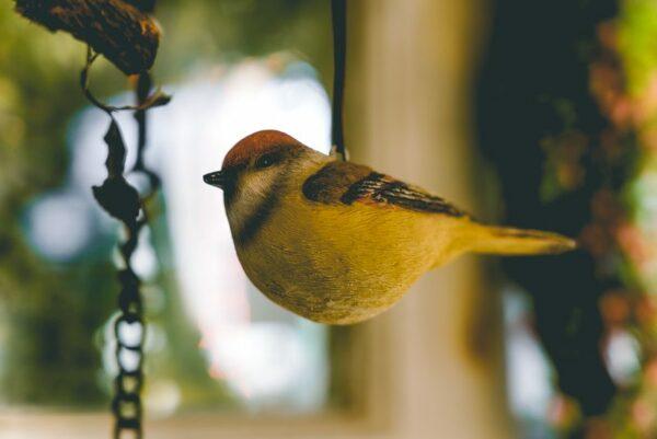 Hanging-birds-05