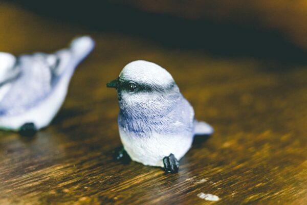 Little blue bird-002
