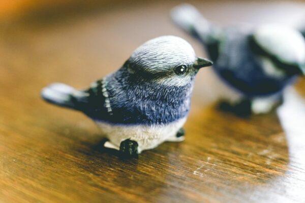 Little blue bird-003