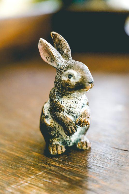 Mini bunny-002