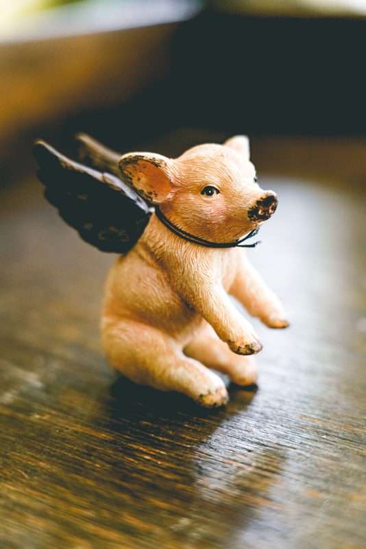 Mini flying pig-002